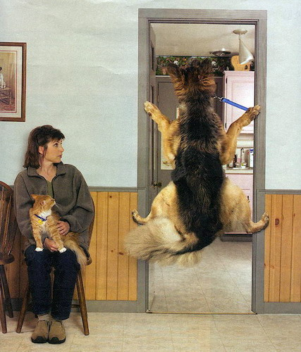 http://bezumnoe.ru/fun/Visiting-the-vet.jpg