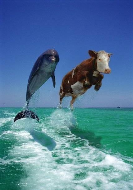 http://bezumnoe.ru/fun/cow_n_dolphin.jpg